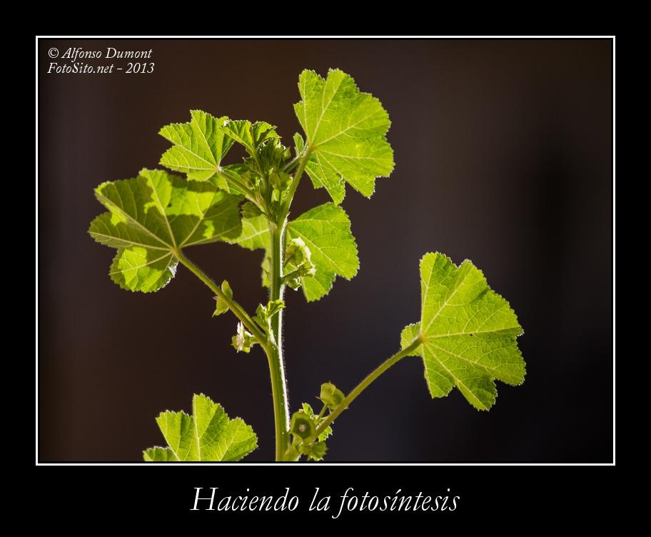Haciendo la fotosintesis