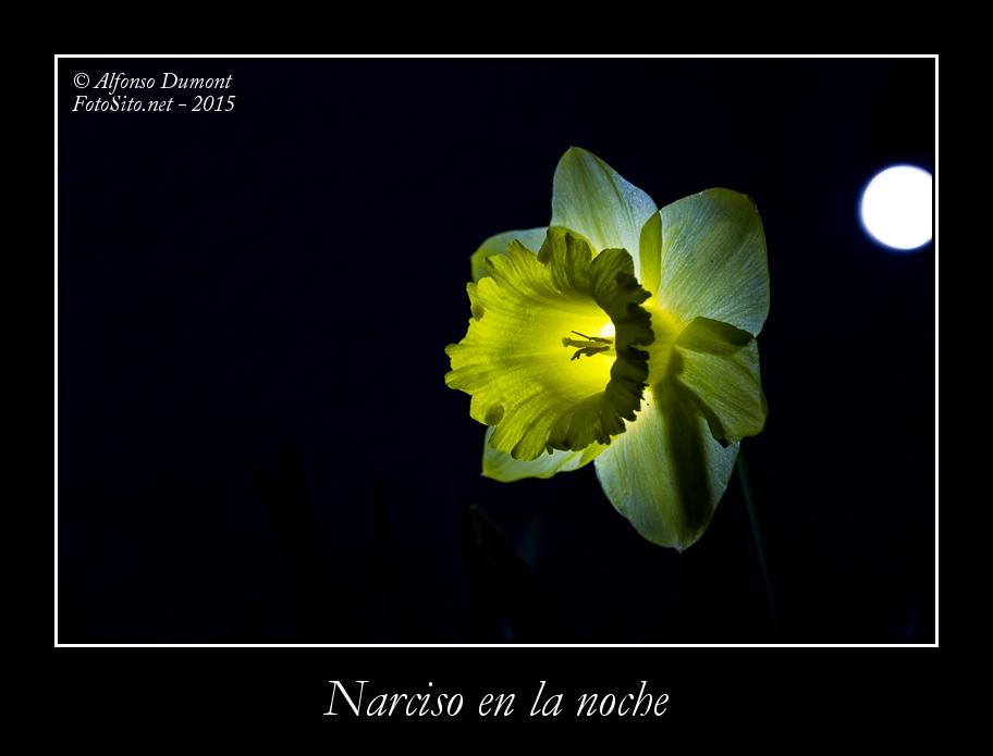 Narciso en la noche