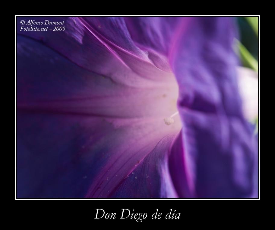Don Diego de dia