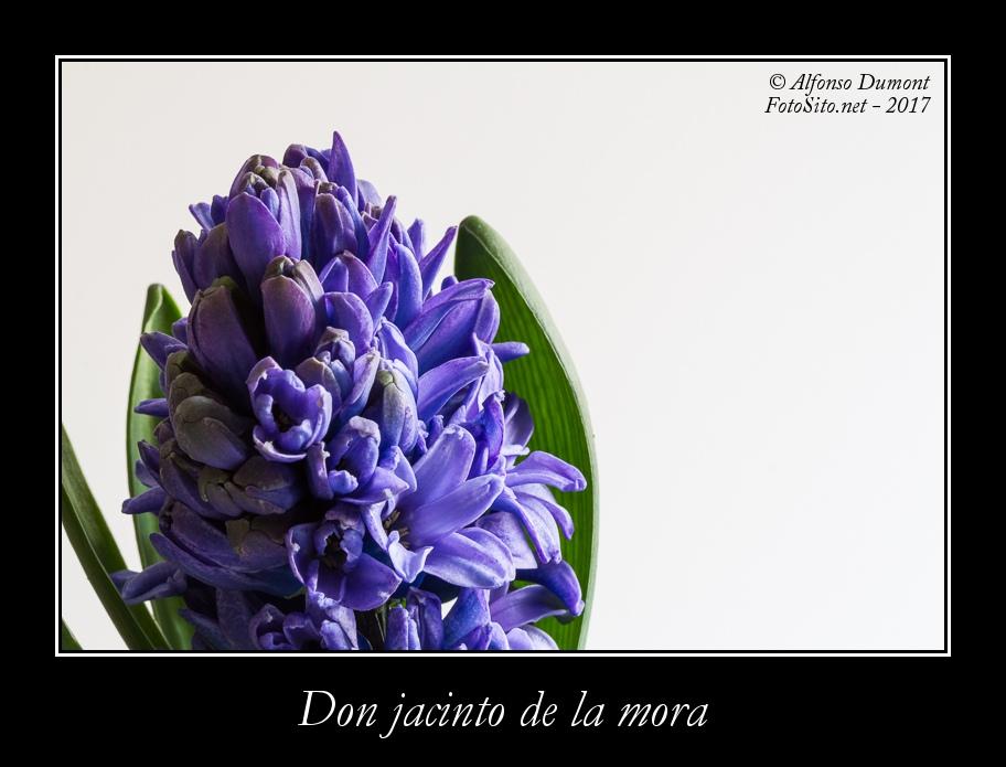 Don jacinto de la mora