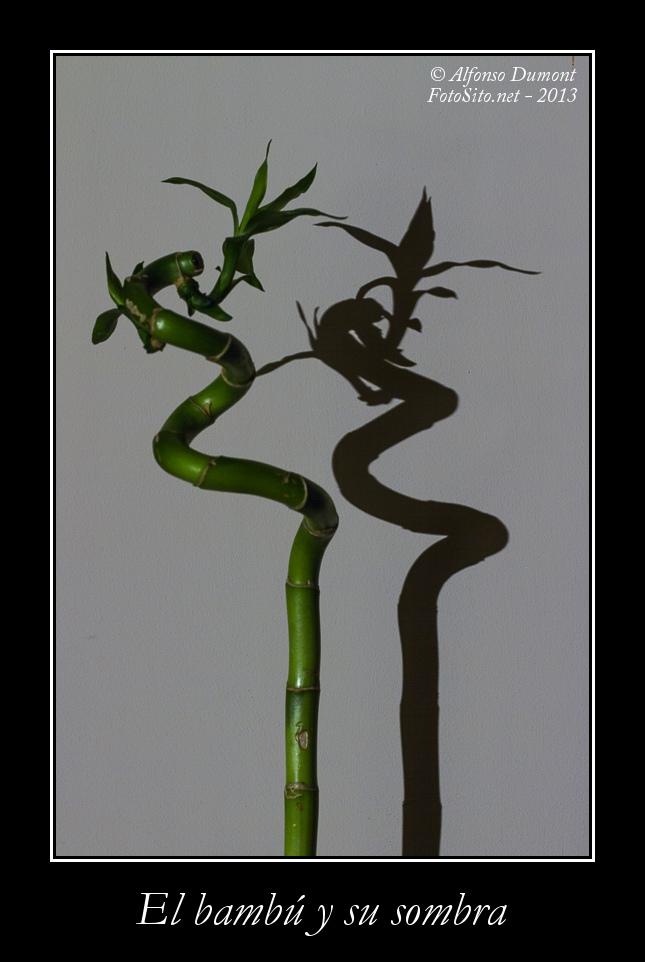 El bambu y su sombra