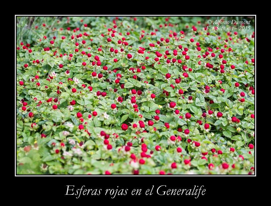 Esferas rojas en el Generalife