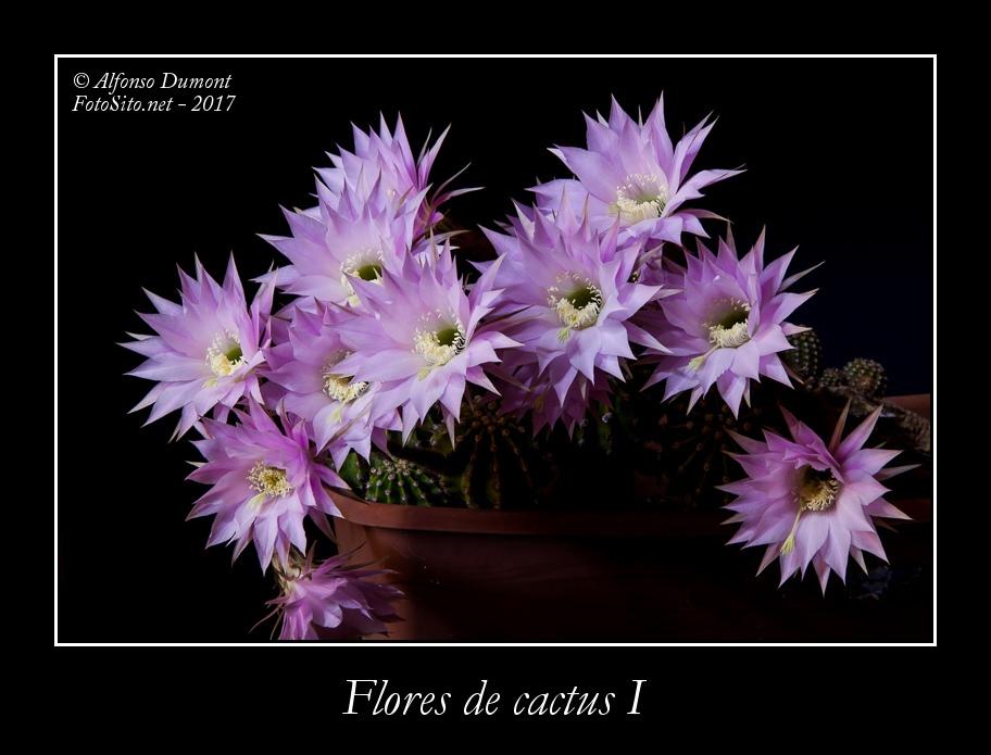 Flores de cactus I