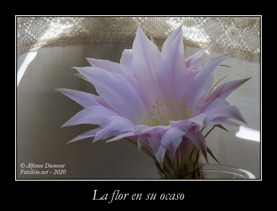 La flor en su ocaso