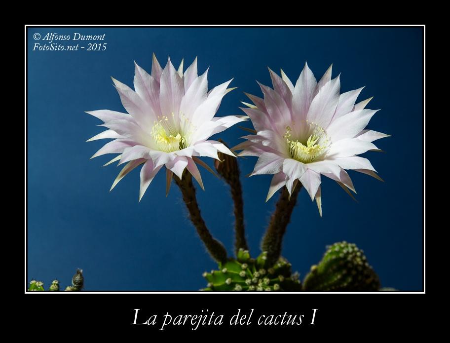 La parejita del cactus I
