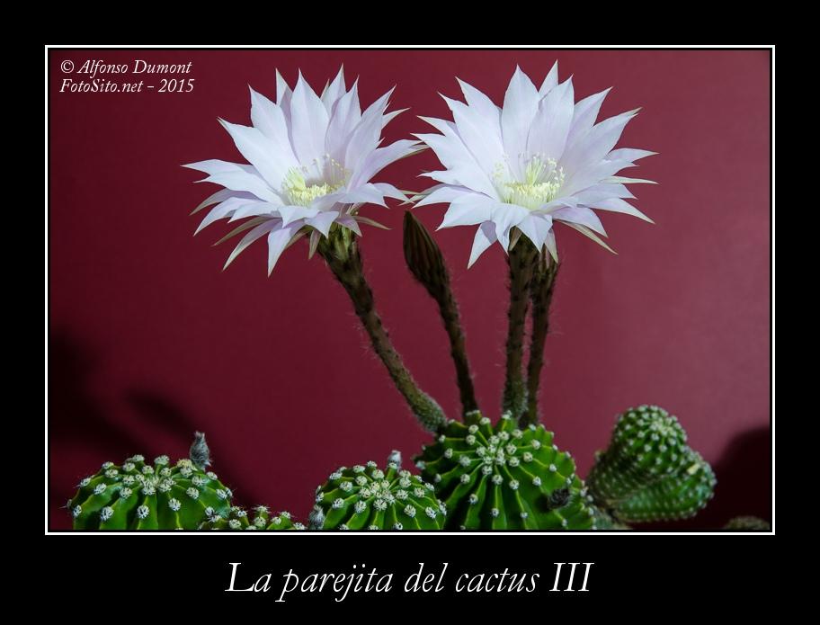 La parejita del cactus III