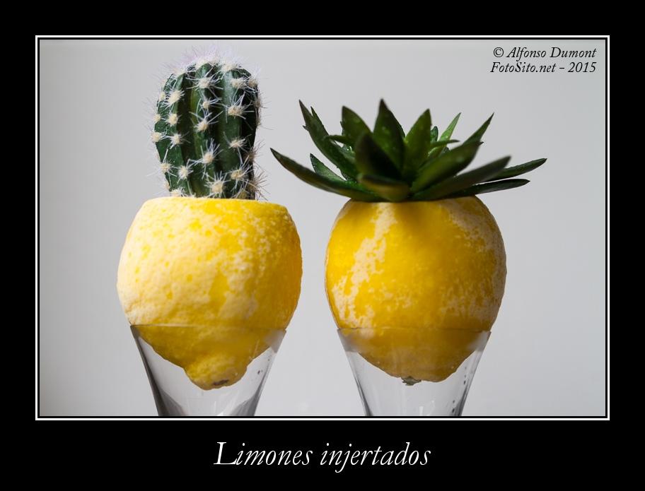 Limones injertados