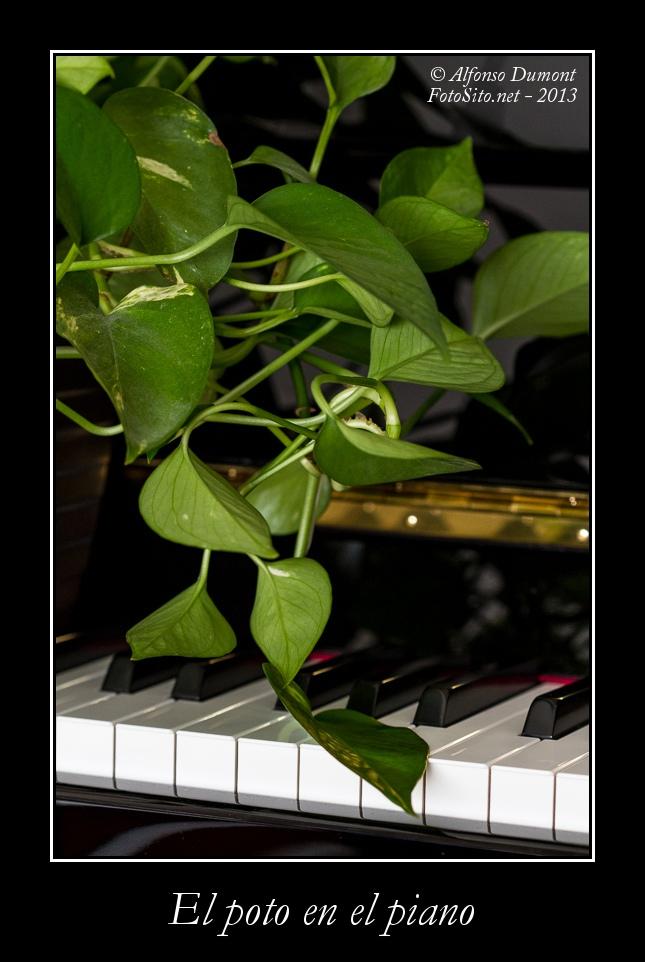 El poto en el piano 1