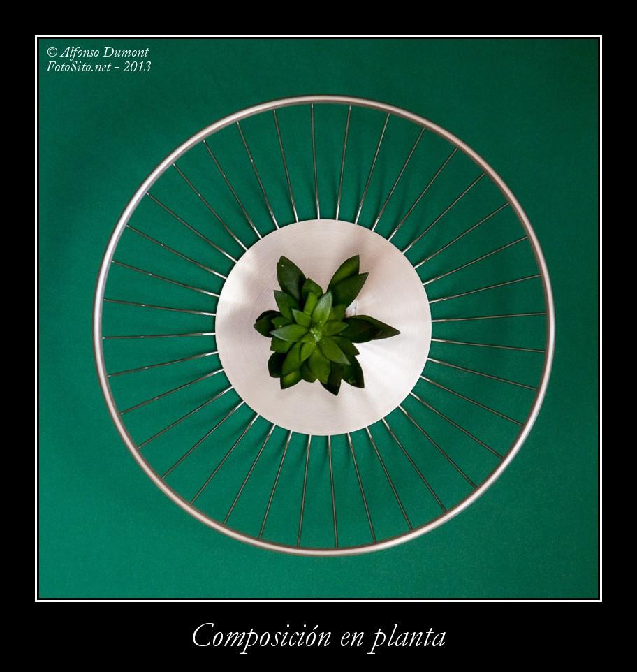 Composicion en planta