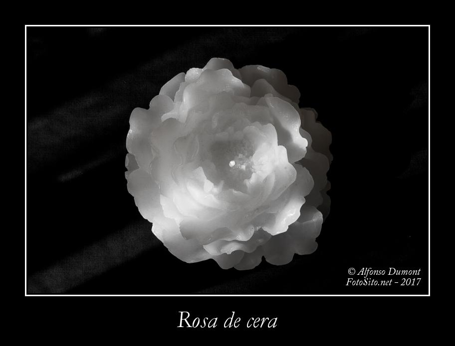 Rosa de cera